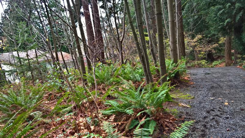 Парк крошечный, но природа сохранена максимально