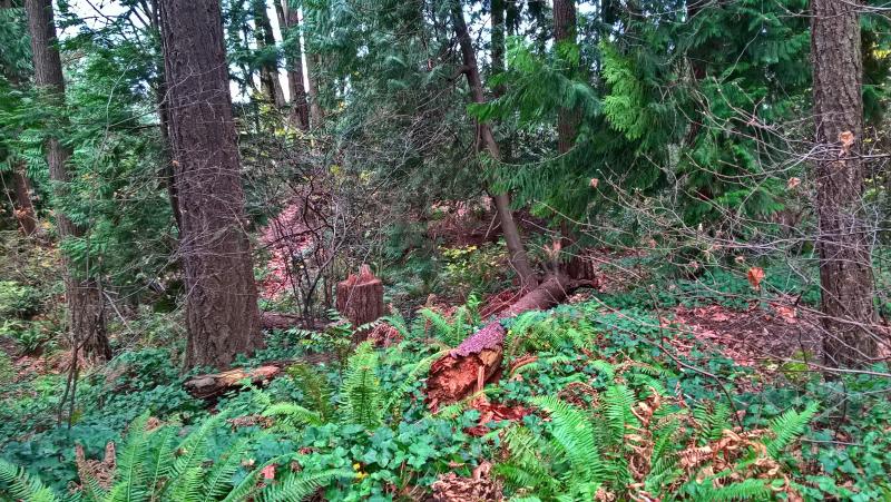 Сохранение валежника, бурелома и срезанные деревья
